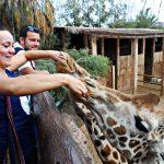 Studentka dotyka pyska żyrafy