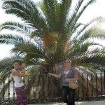 Dwie studetki pozują przy rozłożystej palmie